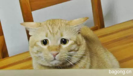 哈哈,这只猫一用逗猫棒  瞬间变身梁朝伟4