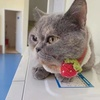(无偿只限北京)可爱小猫咪咪求抱走
