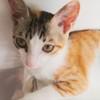 三个月小花母猫,求爱猫人免费收养