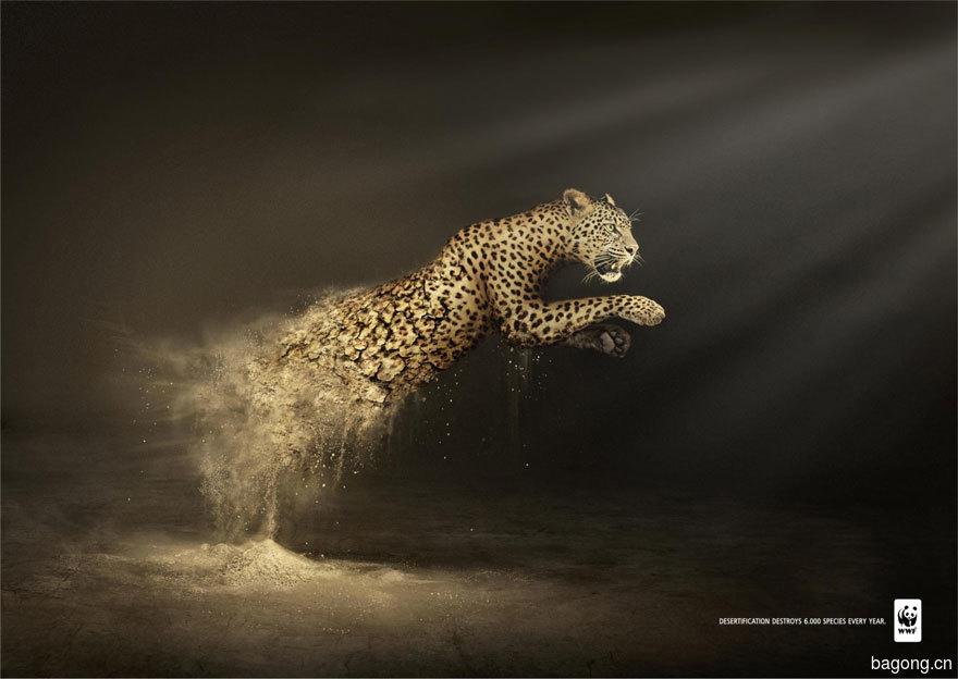 33个动物公益广告震撼人心39