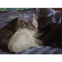 小猫咪求领养