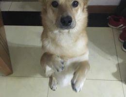 寻狗启示,狗狗,名字甜甜,于5...