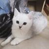 急!!迫切找寻小猫!!!!我家...