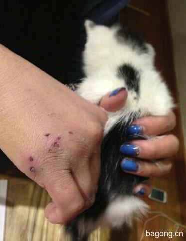 虐猫事件再爆发!谁来拯救这些生命?3