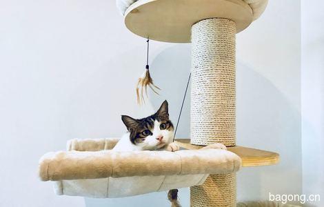 杭州小猫咪已绝育待领养2