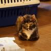 玳帽猫咪找家