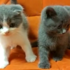黏人的猫宝宝求领养