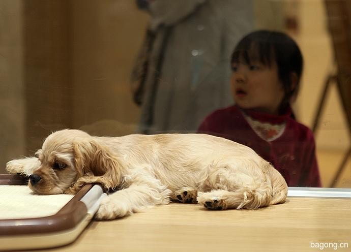 跨国看门道,推敲日本宠物店的经营模式8