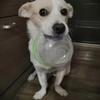 一岁男狗宝寻领养
