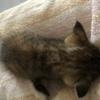幼猫狸花猫求领养