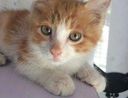 三个月的小猫咪走丢了