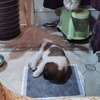 有只狗狗在无锡市八百伴附近流浪,想找个爱狗人士收养