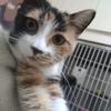 粘人小猫找领养