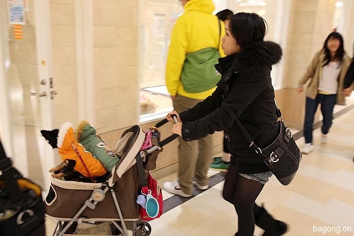 跨国看门道,推敲日本宠物店的经营模式24