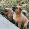 两只小狗勾!是串串!可可爱爱!寻找一个家!