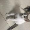 一只自家猫生两月大母猫求抱走