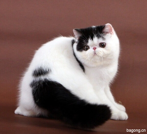 教您快速辨别猫星人品种!!!12