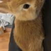 超可爱的兔兔想找一个好人家