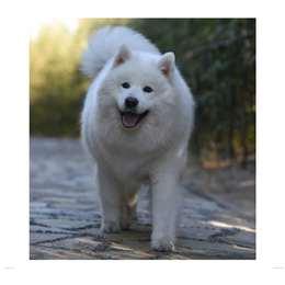 寻狗启示 本人有一爱犬,于2019...