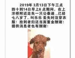 寻狗启示,2019年3月13日下午3点...