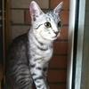 爱猫咪10元起家庭寄养宠物寄养