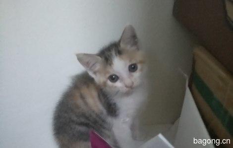 健康活泼的小猫咪免费领养了1