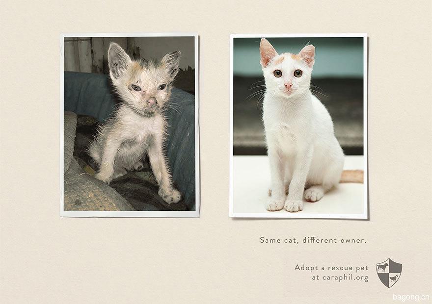 動物廣告201.jpg