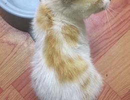猫咪是上个月底捡到的小母猫,刚...