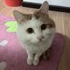 一只2岁小公猫