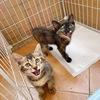 三只小奶猫
