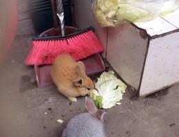 黄石八卦嘴澄月巷走丢两只小兔子