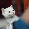 一只可爱小白猫寻找爱心主人