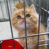 1个月大的小橘猫,大萌子,寻找铲屎官