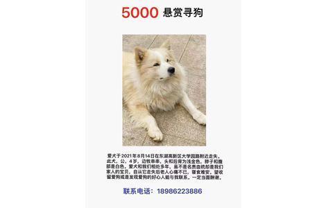 5000悬赏寻狗,爱犬于2021年8月1...