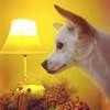 一只可爱的小白狗想找新主人