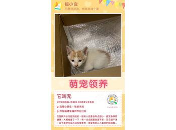 4周小奶猫
