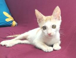 领养小猫咪,橘猫。快满3个月,...