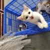 想给一只可爱猫猫找新主人