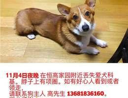 寻狗启示,11月4日夜晚,在上海...