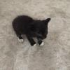 求转发,小区内的小猫咪找领养哦【武汉领养】