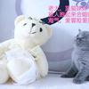 英短蓝猫和蓝白送养仅限爱猫咪人士小偿领养