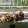 有一只猫咪求好心人收养