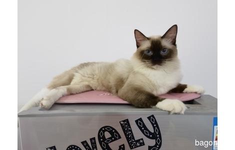 小公猫名字叫尼禄,叫名字会有反...