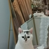 一只温柔粘人的乖猫猫找爱心家长