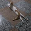 免费领养小公猫