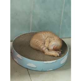 猫和猫用品都免费 找个好心人