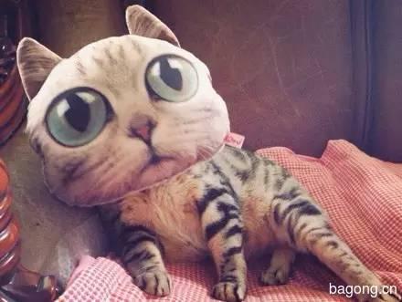 2015可爱猫图集11