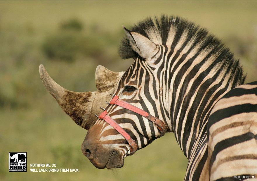 動物廣告82.jpg