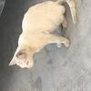 有一只流浪白猫需要找一个好人家