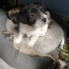 自家生的小狗绝不收取任何费用只想找个爱狗人士领养